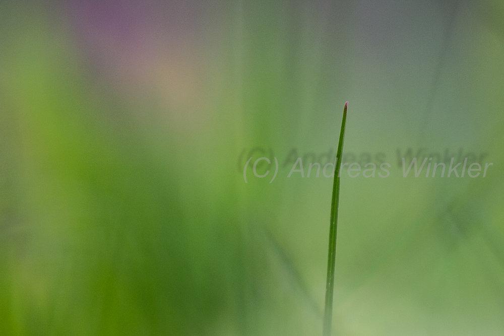 Makro-Art grün