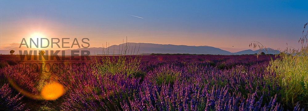 Pano01 - Sonnenaufgang in den Lavendelfeldern am Plateau de Valensole