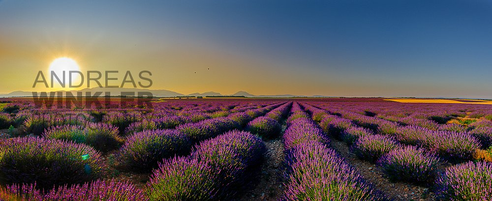 Pano02 - Sonnenaufgang über dem Lavendelfeld