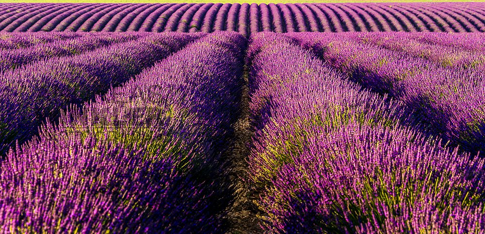 Pano03 - Lavendelpanorama