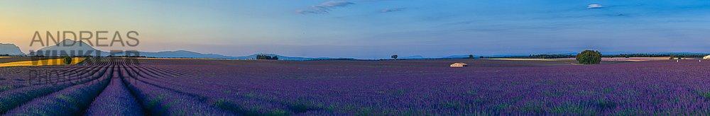 Pano08 - Sonnenaufgang in den Lavendelfeldern auf dem Plateau de Valensole